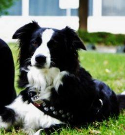 Schulhund Ronja
