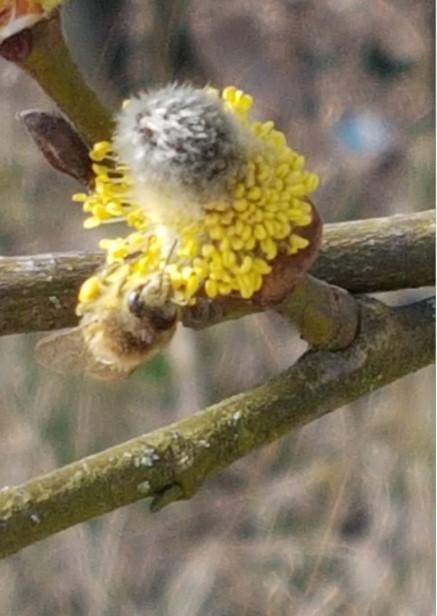 Frühling! Endlich ist er da! (3)